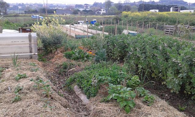 sOrtuak: ortu ekologikoak euskaraz